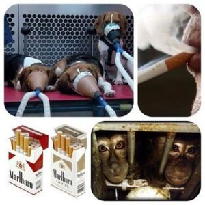 hundetuerversuche
